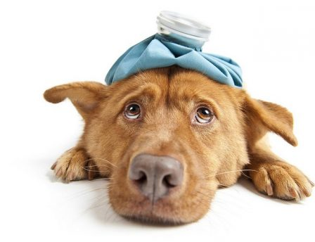 Emergency instructions for poisoned dog