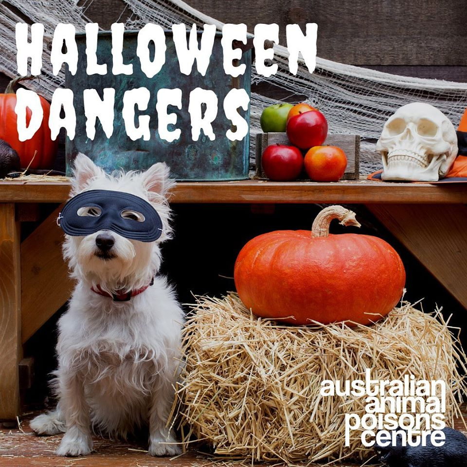 halloween animal poisons