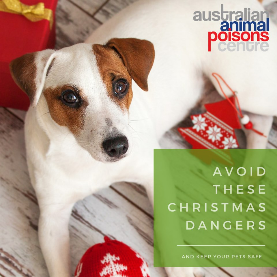 christmas pet poisons