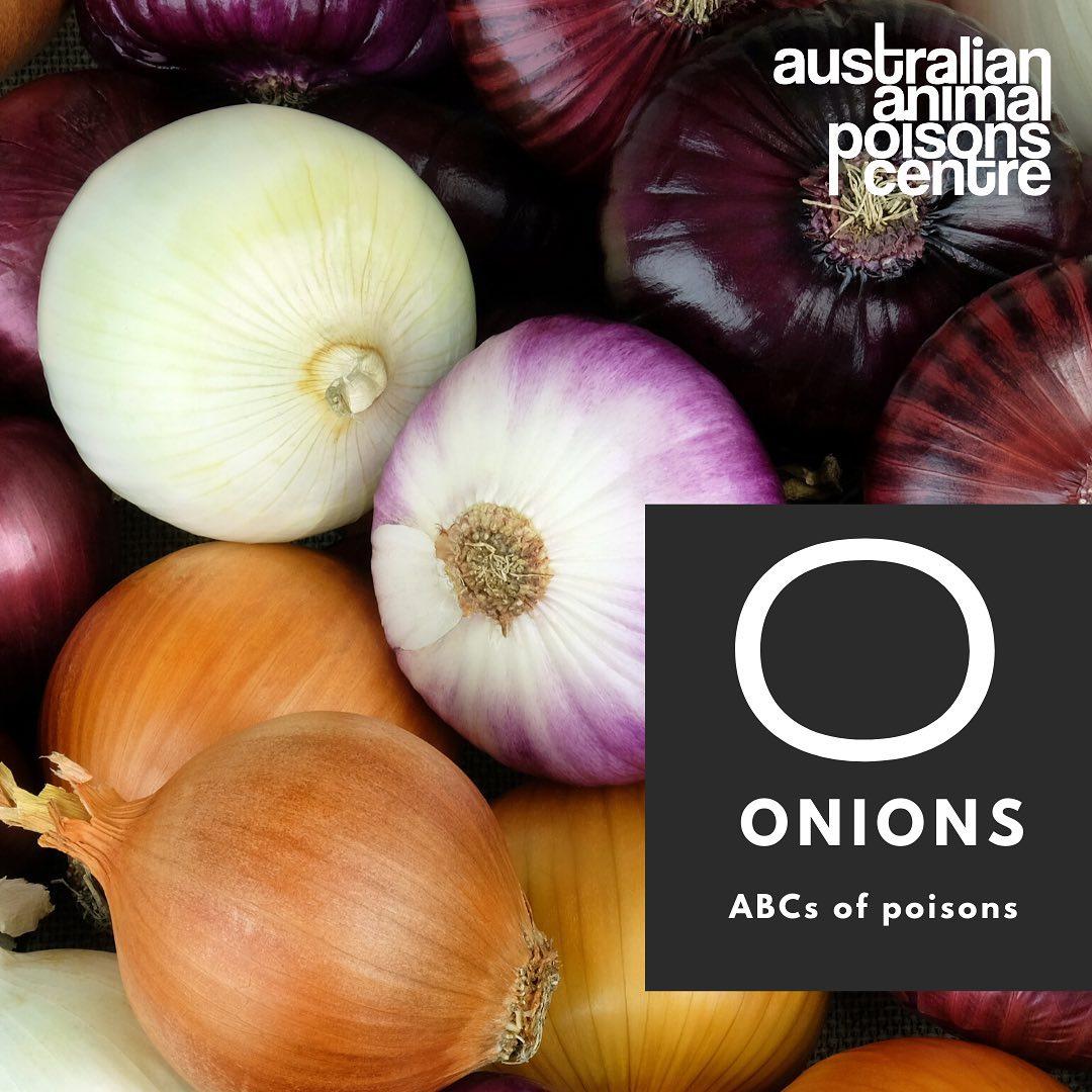 onion poisoning