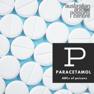 paracetamol for pets