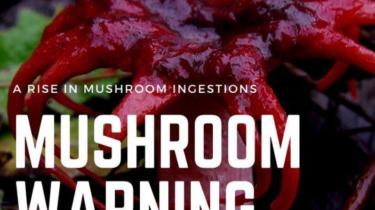 mushrooms and dogs