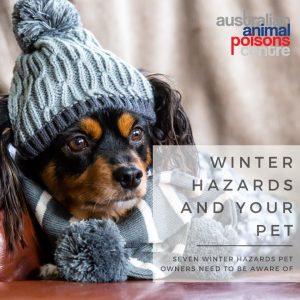 dog winter hazards