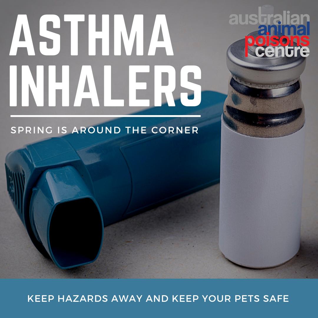 asthma inhaler dog