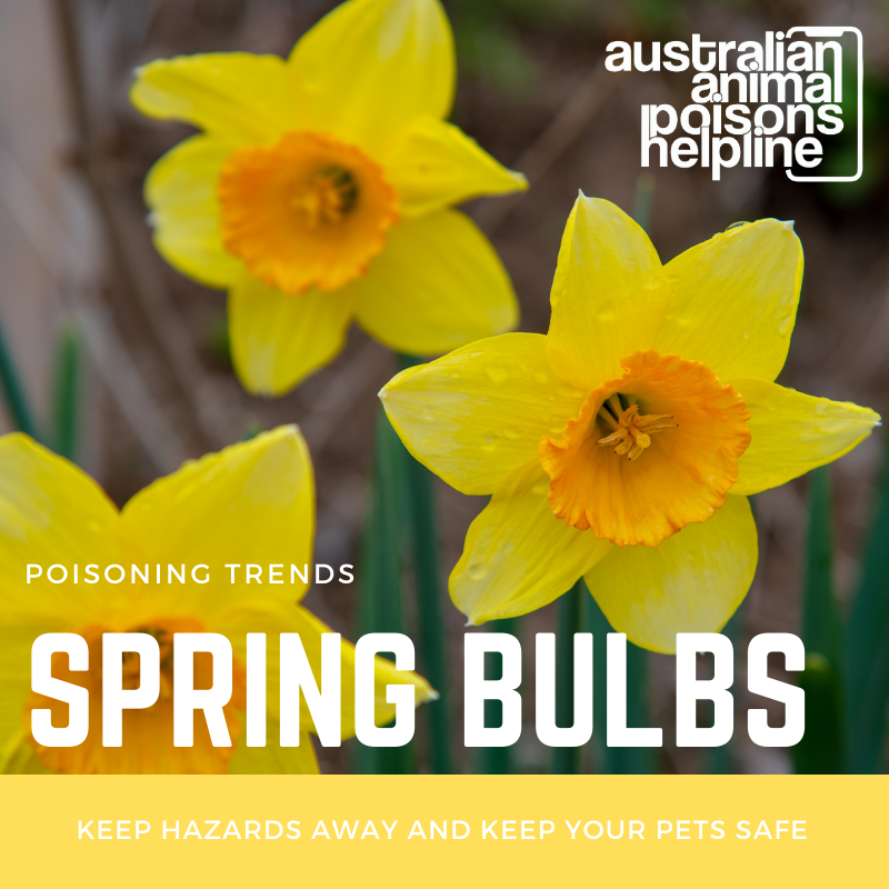 spring bulbs and pets