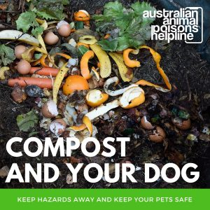 compost poisoning dogs