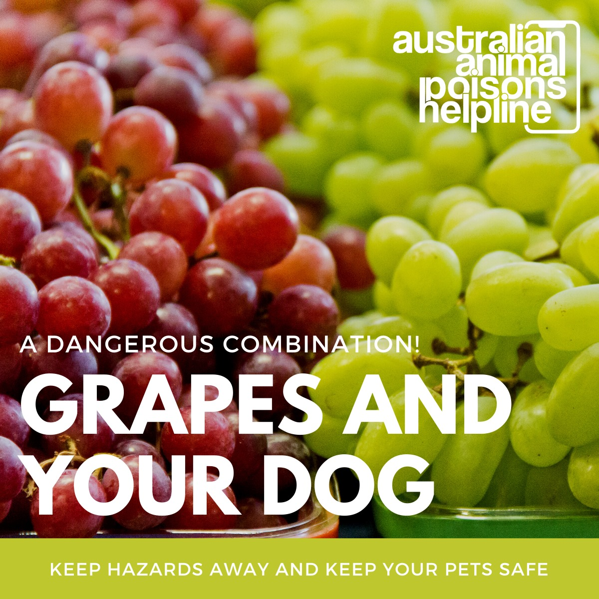 Grapes and your dog